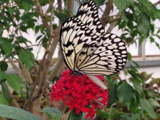 Butterfly House at Put-in-Bay